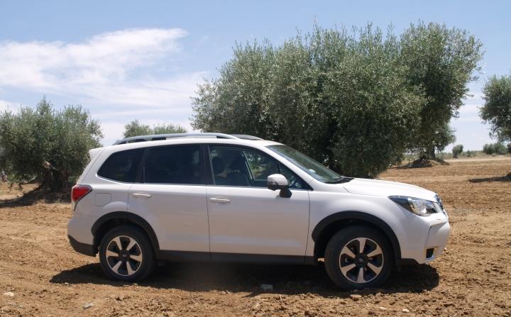 Subaru Forester 2019 infoblogmotor.com